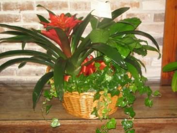 Plant Basket 2 Plant Baskets