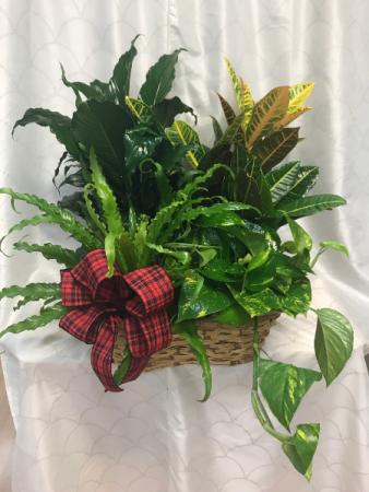 Plant Basket  4 Plants in Basket