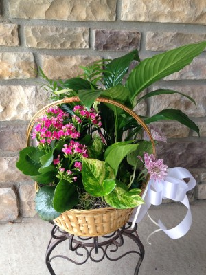 Plant Basket  in Johnstown, CO | Cherished Events