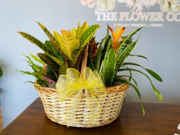 5 piece Plant Basket
