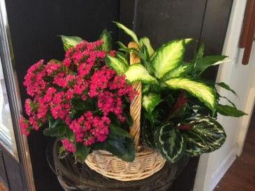 Plant Basket Dish Garden