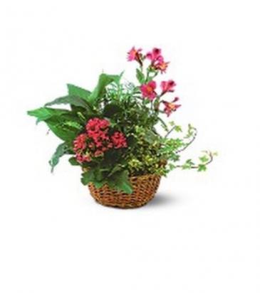 Plant basket in pinks Plant basket medium