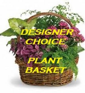 Plant Basket  Plant in Saint Marys, PA | GOETZ'S FLOWERS