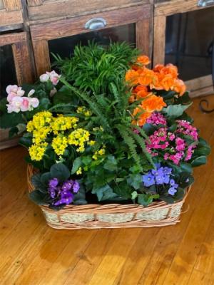 Plant Basket Plant in Du Bois, PA | BRADY STREET FLORIST