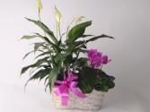 Plant Basket plant basket