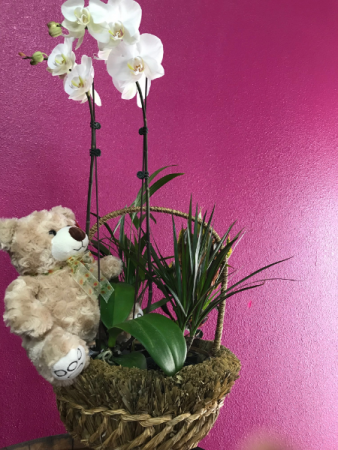 Plant Basket with Teddy Bear