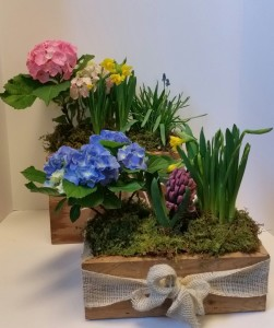 Spring Planter Box seasonal in Northport, NY | Hengstenberg's Florist