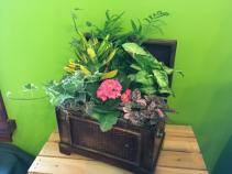 Plant Chest Dish Garden