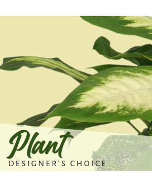 Plant Designer's Choice in Riverside, CA | Willow Branch Florist of Riverside