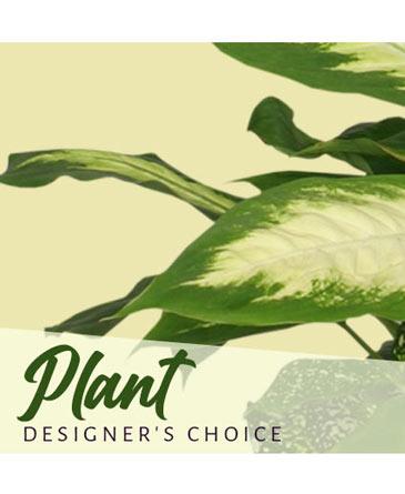 Plant Designer's Choice