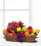 Plant & Fruit Basket