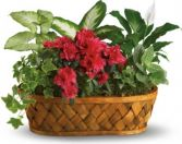 PLANT GALORE BASKET