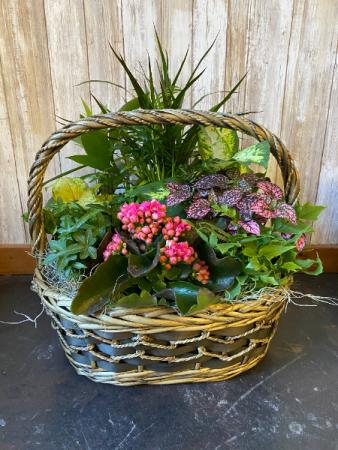Plant Garden Basket Dish Garden