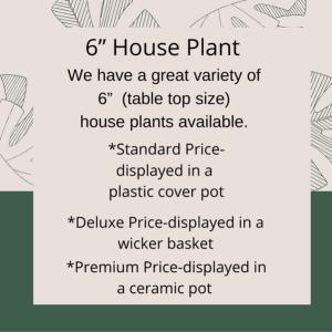 Plant Info  in Warsaw, IN | Maple Avenue Flowers