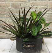 Plant Jardin