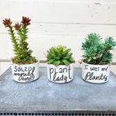 """Plant Lady"" Artificial Plant Trio"