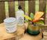 Plant Lady Life  Candle, Soap, and Plant Bundle