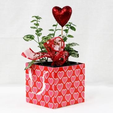 Plant Love Valentine's Day