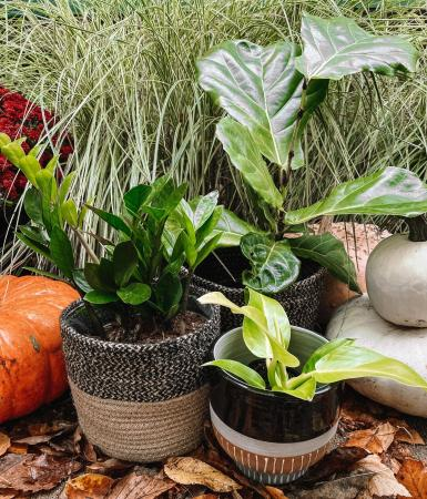 Plant Lovers Bundle  3 plants and 3 Containers
