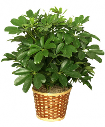 Plant of the Month Club Monthly subscription