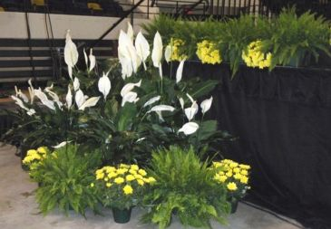 Plant Rental In Washington DC Plant Rental For Event Or Convention in DC