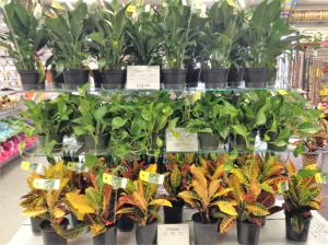 Plant Sale  in Dayton, OH | FLOWERAMA