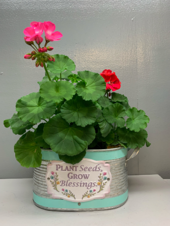 Plant Seeds Grow Blessings with geraniums Outdoor plant