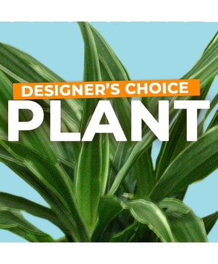 Plant Selection Designer's Choice