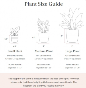 Plant Size Guide  in Vacaville, CA | The Red Anthurium