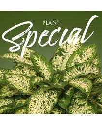 Plant Special Designer's Choice
