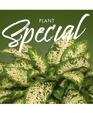 Plant Special Designer's Choice in Corner Brook, NL | The Orchid