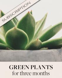 Plant Subscription (3) Plant