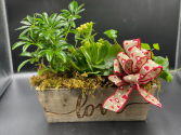 Planted Love Green Plants