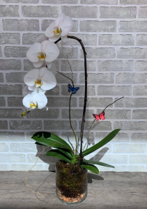 Planted Orchid in a glass vase