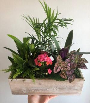 Planter Basket   in Cambridge, ON | KELLY GREENS FLOWERS & GIFT SHOP