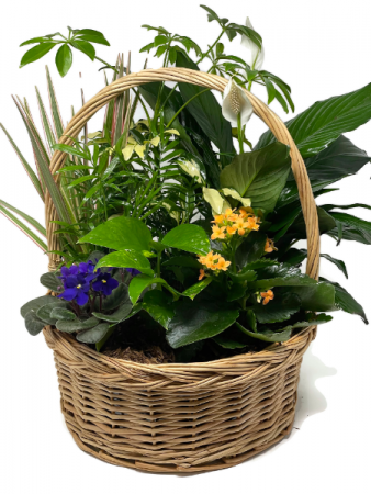 Planter Basket T-5 Blooming Plant