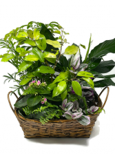 Planter Basket T-6 Blooming Plant