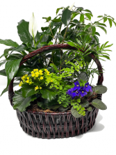 Planter Basket T-7 Blooming Plant