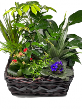 Planter Basket T-8 Blooming Plant