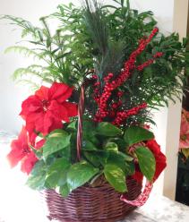 Planter basket Indoor plants