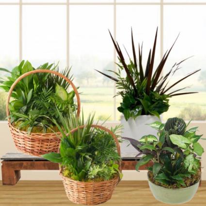 Planter-Dish Garden