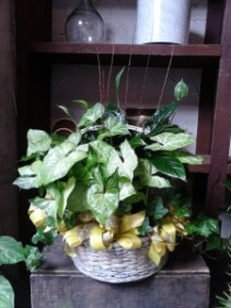 Planter - Extravagant