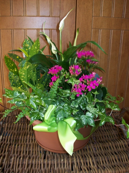Planter Garden Blooming and Tropical plants