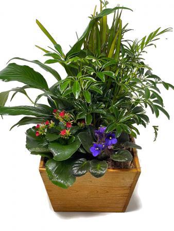 Planter Basket T-3 Planter Garden