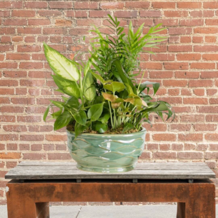 Planter in Pottery