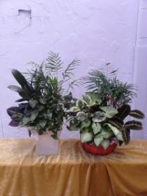 Planter - Large