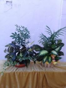 Planter - Medium Plus