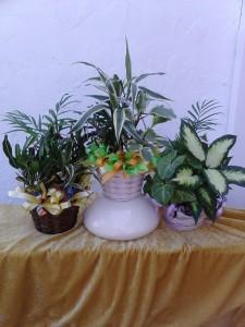 Planter - Petite
