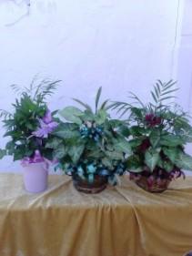 Planter - Small