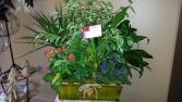 Planter  Tropical Mix